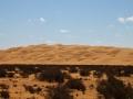 desert behind